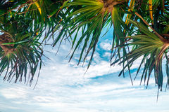 Het kijken omhoog in een palm Royalty-vrije Stock Foto