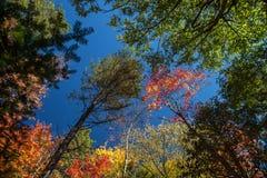 Het kijken omhoog in het hout in de herfst royalty-vrije stock afbeeldingen