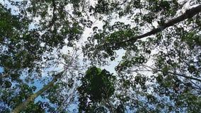 Het kijken omhoog van bomen Stock Afbeeldingen