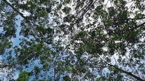 Het kijken omhoog van bomen Royalty-vrije Stock Afbeeldingen
