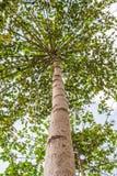 Het kijken omhoog van onder mening de boom Stock Foto's