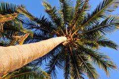 Het kijken op Palm Ttree Royalty-vrije Stock Foto's