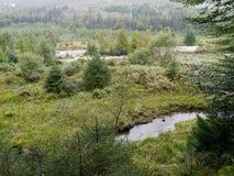 Het kijken over flora om rivier in Ennerdale te drogen royalty-vrije stock afbeeldingen