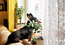 Het kijken uit het venster! stock foto