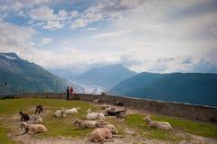 Het kijken uit over de Aletsch-Gletsjer Royalty-vrije Stock Fotografie
