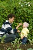 Het kind eet bes stock foto's