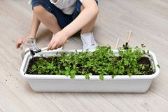 Het kind harkt het geven voor de oogst van groen stock afbeelding