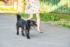 Het kind loopt langs de weg naast een kleine zwarte hond stock foto