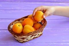 Het kind neemt abrikoos van mand Stock Afbeeldingen