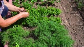 Het kind onderzoekt het gras in de weide door een vergrootglas Meisje die de bloem onderzoeken door het overdrijven stock video