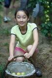 Het kind plukt het fruit Stock Fotografie