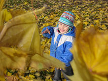 Het kind werpt bladeren royalty-vrije stock fotografie