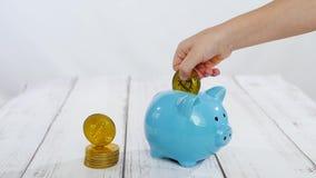 Het kind zet een bitcoin gouden muntstuk in een spaarvarken op een witte achtergrond stock footage
