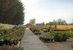 Het kinderdagverblijf bloeit en plant centrum Stock Afbeelding