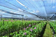 Het kinderdagverblijf van de orchideeinstallatie stock foto