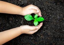 Het kindhanden van het ecologieconcept het houden plant een boomjong boompje met op grondwereld stock fotografie