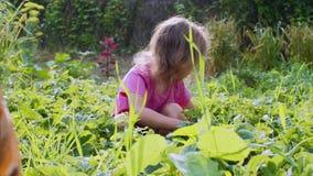 Het kindmeisje eet aardbeien zitten neer gehurkt in de tuin stock video