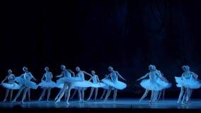Het klassieke Meer van de balletzwaan stock video