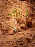 Het kleine boom Geïsoleerde groeien in concrete gaten royalty-vrije stock afbeeldingen