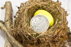 Het kleine Ei van het Nest/Oude Zilveren Dollar Royalty-vrije Stock Afbeeldingen