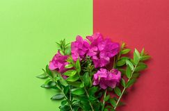 Het kleine elegante boeket van groene takjes van tuin de fuchsiakleurig roze bloemen op duo stemt chartreuse rode achtergrond Pas stock afbeeldingen