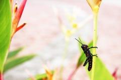 Het kleine exotische insect streek stil op de stam neer stock foto
