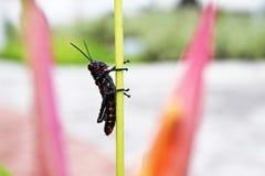 Het kleine exotische insect streek stil op de stam neer stock afbeelding