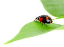Het kleine insect stock foto