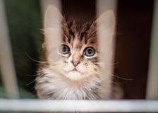 Het kleine katje in de kooi kijkt door de bars met de bezinning van staven in de ogen royalty-vrije stock foto's