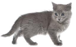 Het kleine katje geïsoleerd spelen royalty-vrije stock foto