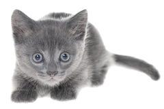 Het kleine katje geïsoleerd spelen royalty-vrije stock foto's