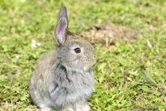 Het kleine konijn is op een weiland Stock Afbeelding