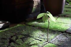 Het kleine maar sterke boom groeien tussen harde rots stock foto's