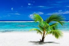 Het kleine palm hangen over het overweldigen van blauwe lagune Royalty-vrije Stock Fotografie