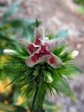 Het kleine paradijs van het bloemgebied van de Oekraïne Royalty-vrije Stock Afbeelding