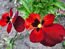 Het kleine paradijs van het bloemgebied van de Oekraïne Stock Foto
