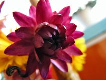 Het kleine paradijs van het bloemgebied van de Oekraïne Royalty-vrije Stock Foto's