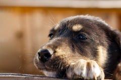 Het kleine puppy onderzoekt droevig de afstand Dakloze hond stock foto