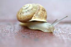 Het kleine slak glijden Stock Afbeeldingen