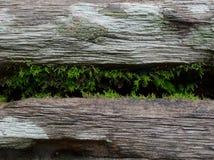 Het kleine varen groeien binnen de barst van logboekbank in het park met houten textuur in wijnoogst en grunge stileert royalty-vrije stock afbeeldingen