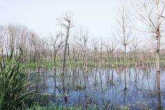 Het kleine vernietigde hout die zich in de waterpool bevinden Stock Afbeelding