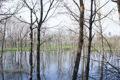 Het kleine vernietigde hout die zich in de waterpool bevinden Royalty-vrije Stock Foto