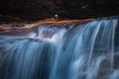 Het kleine vogel zingen met watervallen Stock Afbeelding