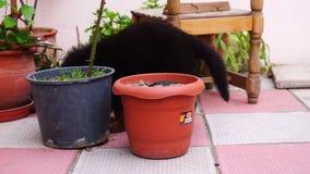 Het kleine zwarte Kaukasische herderspuppy spelen in de werf stock videobeelden