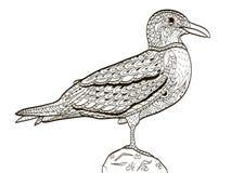 Het kleurende boek van de vogelzeemeeuw voor volwassenenvector Royalty-vrije Stock Afbeelding