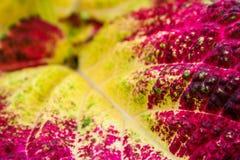 Het kleurrijke blad Stock Fotografie