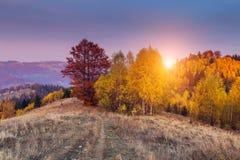 Het kleurrijke bos Royalty-vrije Stock Afbeelding