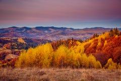 Het kleurrijke bos Stock Fotografie
