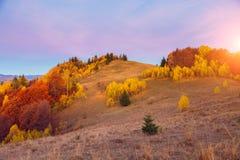 Het kleurrijke bos Stock Foto's