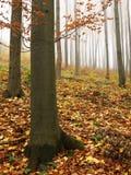 Het kleurrijke bos van de herfst Royalty-vrije Stock Foto's